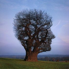 Workshop Mindfulness van Trees van Hennik en Inez van Goor